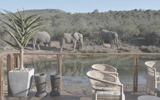 Barefoot Addo Elephant Lodge Südafrika